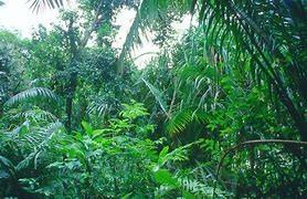 Reception - Rainforest Topic
